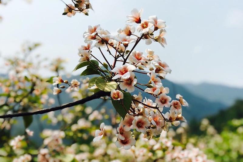 Du lịch Bình Liêu mùa hoa trẩu