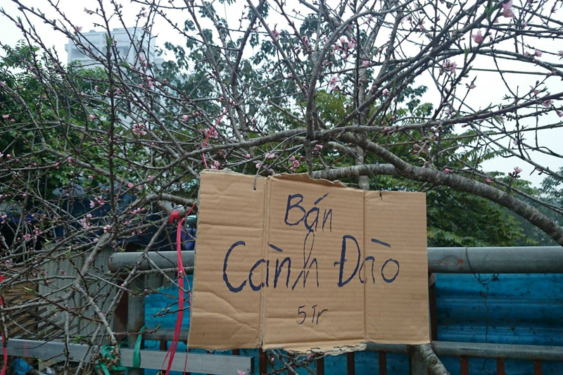 Cấm chơi đào rừng dịp Tết nguyên đán 2021