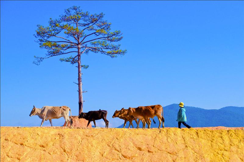 Danh sách các Điểm du lịch Tây Nguyên đẹp