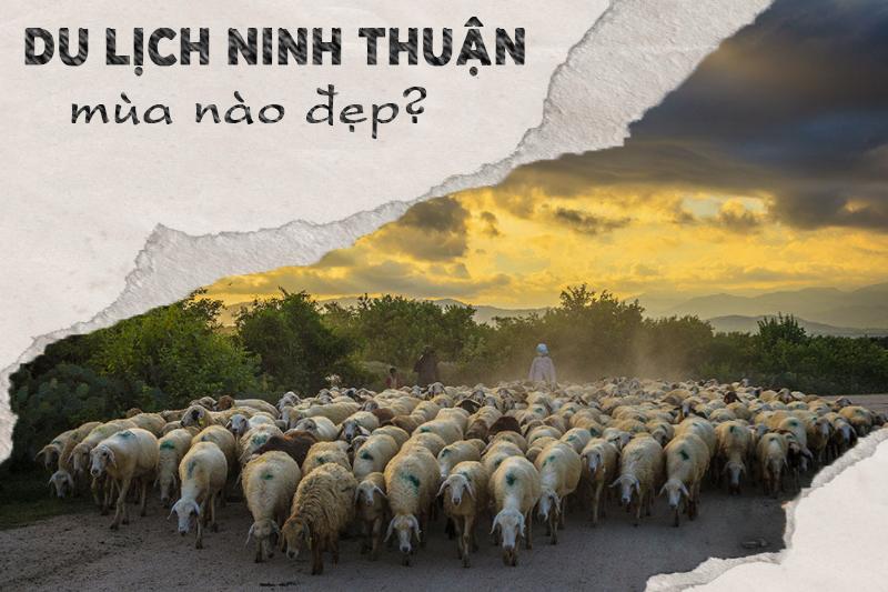 Nên du lịch Ninh Thuận tháng mấy?